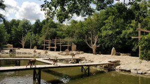 sanctuaire pour animaux le refuge de l'arche et les petits singes